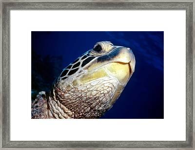Turtles 1 Framed Print by Dawn Eshelman