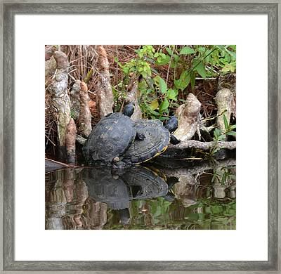 Turtles  Framed Print by Julie Cameron