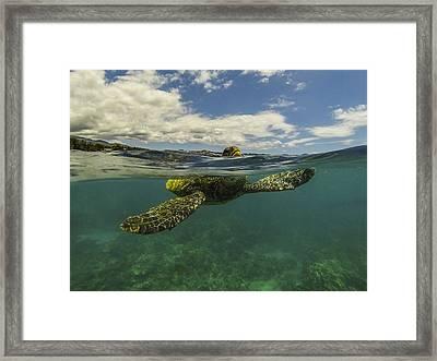 Turtles Need Air Too Framed Print by Brad Scott