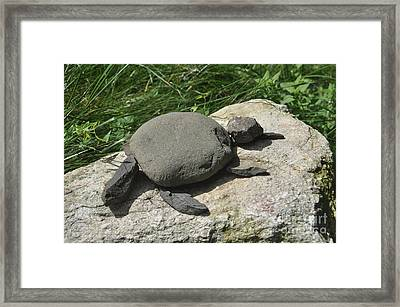 Turtle's Rock Framed Print