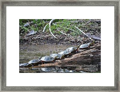 Turtles Framed Print by Terrance Byrd
