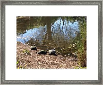 Turtles Three Framed Print by Jim Hubbard