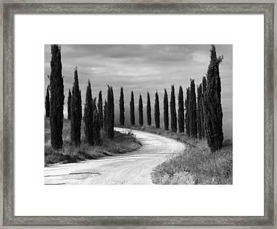 Tuscan Cedars Framed Print by Hugh Smith