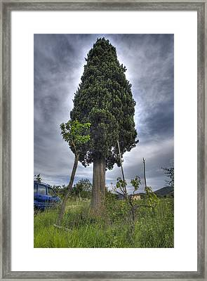 Tuscan Cypress  Framed Print by Al Hurley
