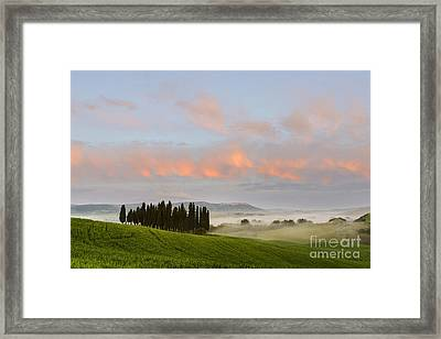 Tuscan Cypresses Framed Print