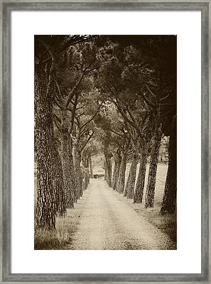 Framed Print featuring the photograph Tuscan Pines by Hugh Smith