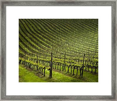 Tuscan Vineyard Series 1 Framed Print