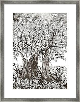 Tuscany Olives Framed Print