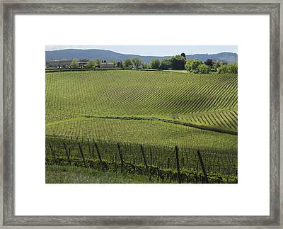Tuscany Vineyard Series 2 Framed Print