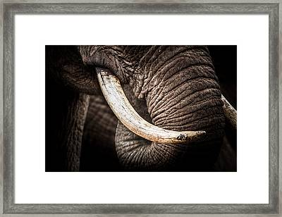 Framed Print featuring the photograph Tusks And Trunk by Mike Gaudaur
