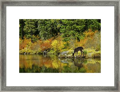 Tuti Fruti Colors And Eye Candy Reflections Framed Print