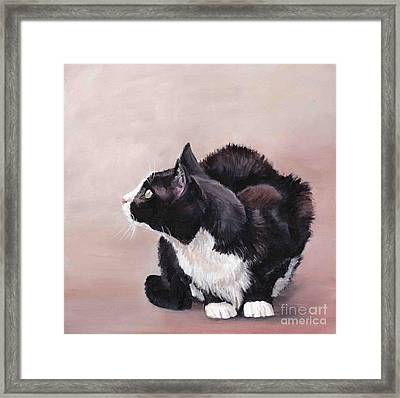 Tuxedo Cat Bird Watcher Framed Print by Charlotte Yealey