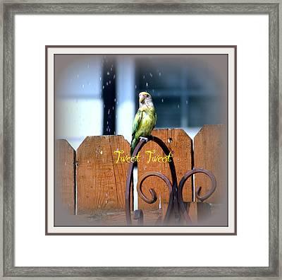 Tweet Tweet Framed Print by Kay Novy