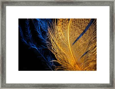 Framed Print featuring the photograph Tweety Bird by Bob Orsillo