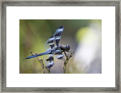 Twelve Spot Hanging Out Framed Print by Shelly Gunderson