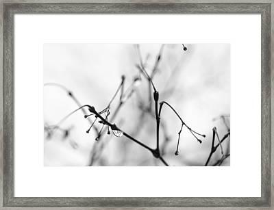 Twiggy Rain Framed Print by Kathy Paynter