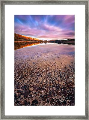 Twigs And Leaves  Framed Print by John Farnan