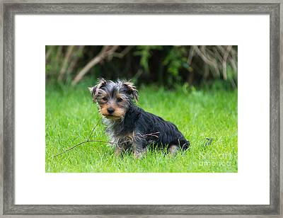 Twigs Framed Print by Andrew  Michael
