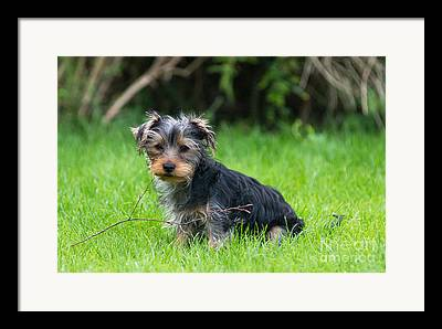 Small Leaping Dog Framed Prints