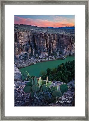 Twilight Cactus Framed Print by Inge Johnsson