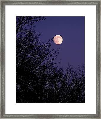 Twilight Moon Framed Print by Rona Black