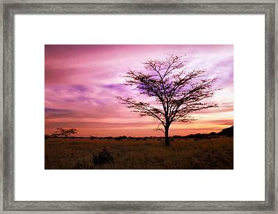 Twilight On The Savanna Framed Print