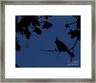 Twilight Sillouette Of Cardinal Framed Print by Amanda Collins