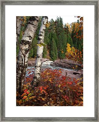 Twin Aspens Framed Print by James Peterson