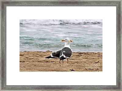 Twin Beaks Framed Print by Susan Wiedmann