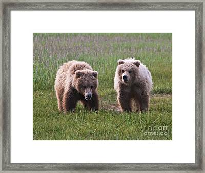 Twin Bear Cubs Framed Print