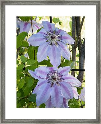 Twin Beauty Framed Print