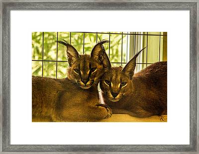 Twin Caracals Framed Print