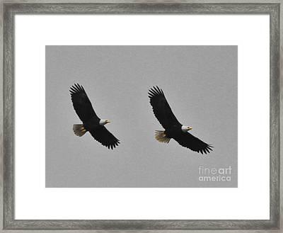 Twin Eagles In Flight Framed Print