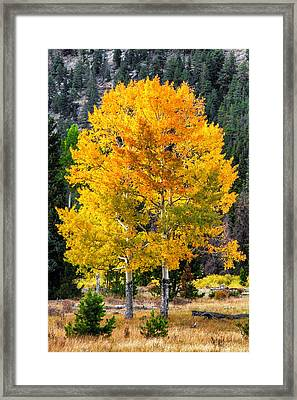 Twin Fall Trees Framed Print
