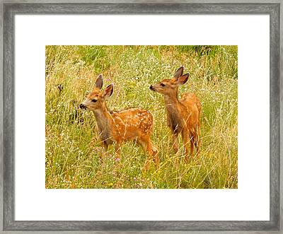 Twin Fawns Framed Print