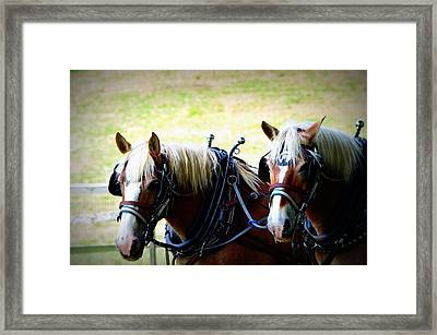 Framed Print featuring the photograph Twin Horses by Cathy Shiflett