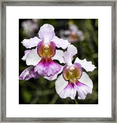 Twin Orchids Framed Print