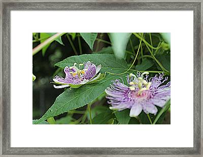 Twin Passion Framed Print by Sarah E Kohara