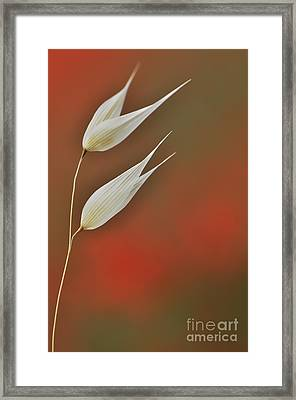 Framed Print featuring the photograph Twin by Simona Ghidini