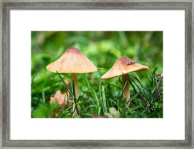 Framed Print featuring the photograph Twin Toadstools. by Gary Gillette