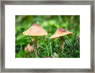 Twin Toadstools. Framed Print