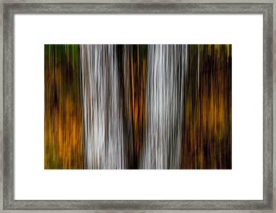 Twin Trunks Framed Print