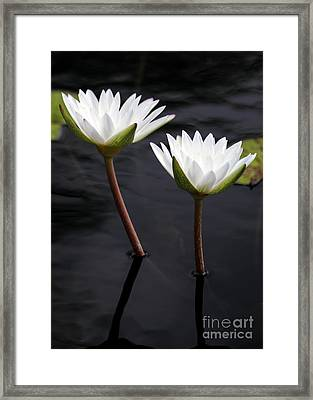 Twin White Water Lilies Framed Print by Sabrina L Ryan