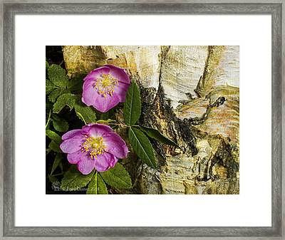 Twin Wild Roses Framed Print
