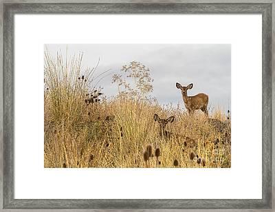Twin Yearlings Framed Print by Randy Wood