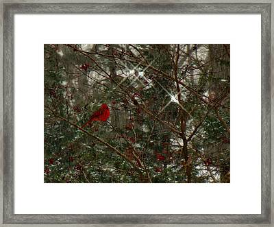Twinkle Twinkle Little Bird Framed Print by Sharon Costa