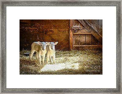 Twins Framed Print by Alana Ranney