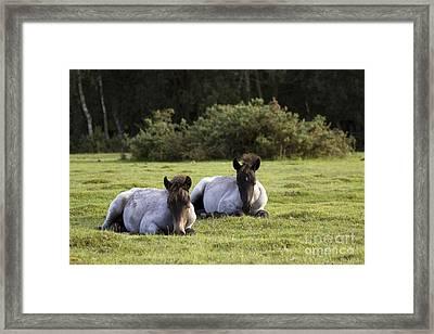 Twins Framed Print by Angel  Tarantella