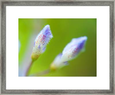 Twins Bloom Framed Print