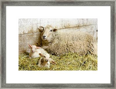 Twins Framed Print by Courtney Webster